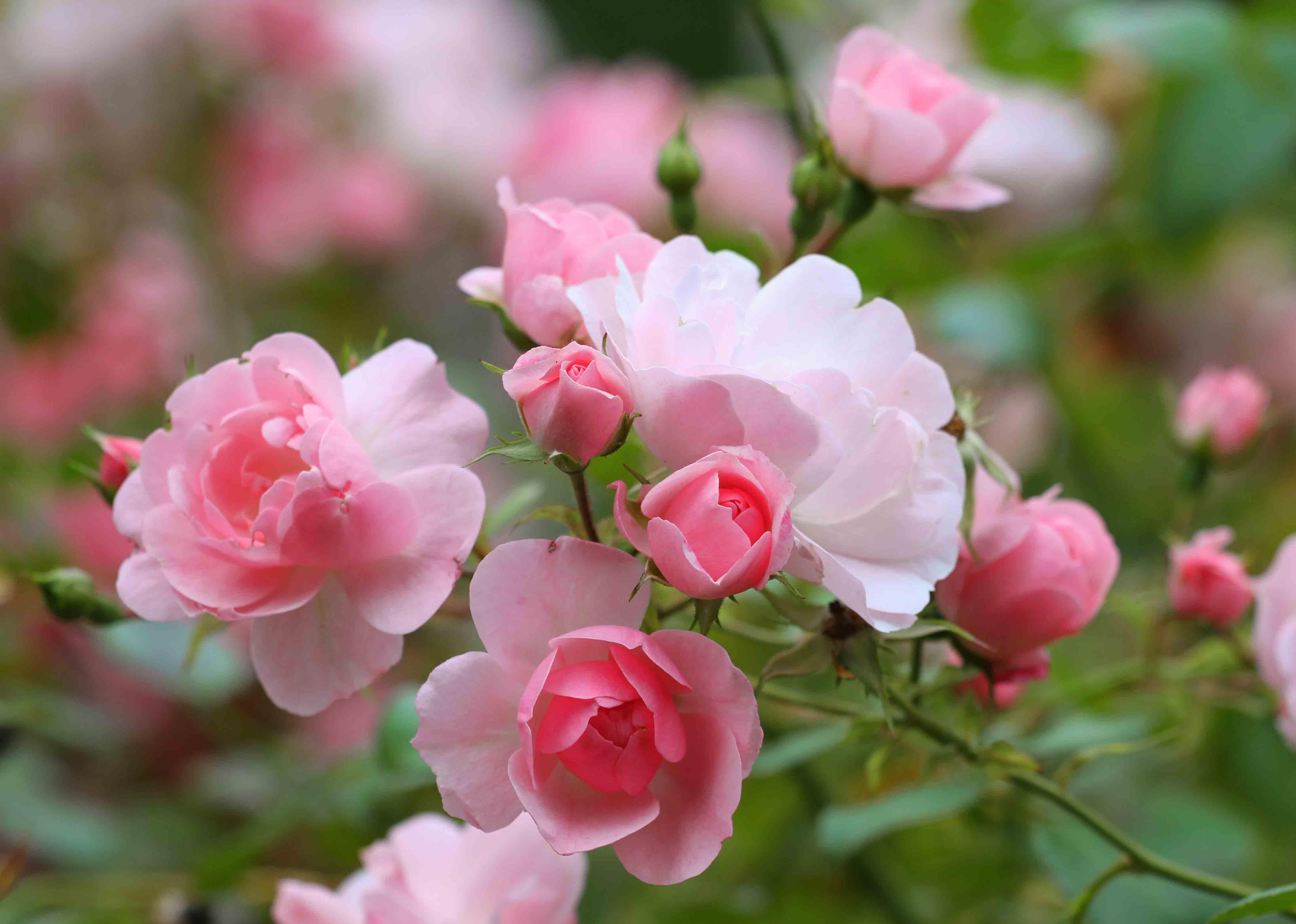 Blumenwellness