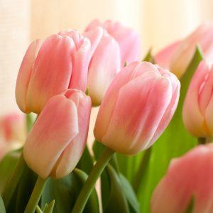 Herzliche Willkommen zurück bei Holland Blumen!