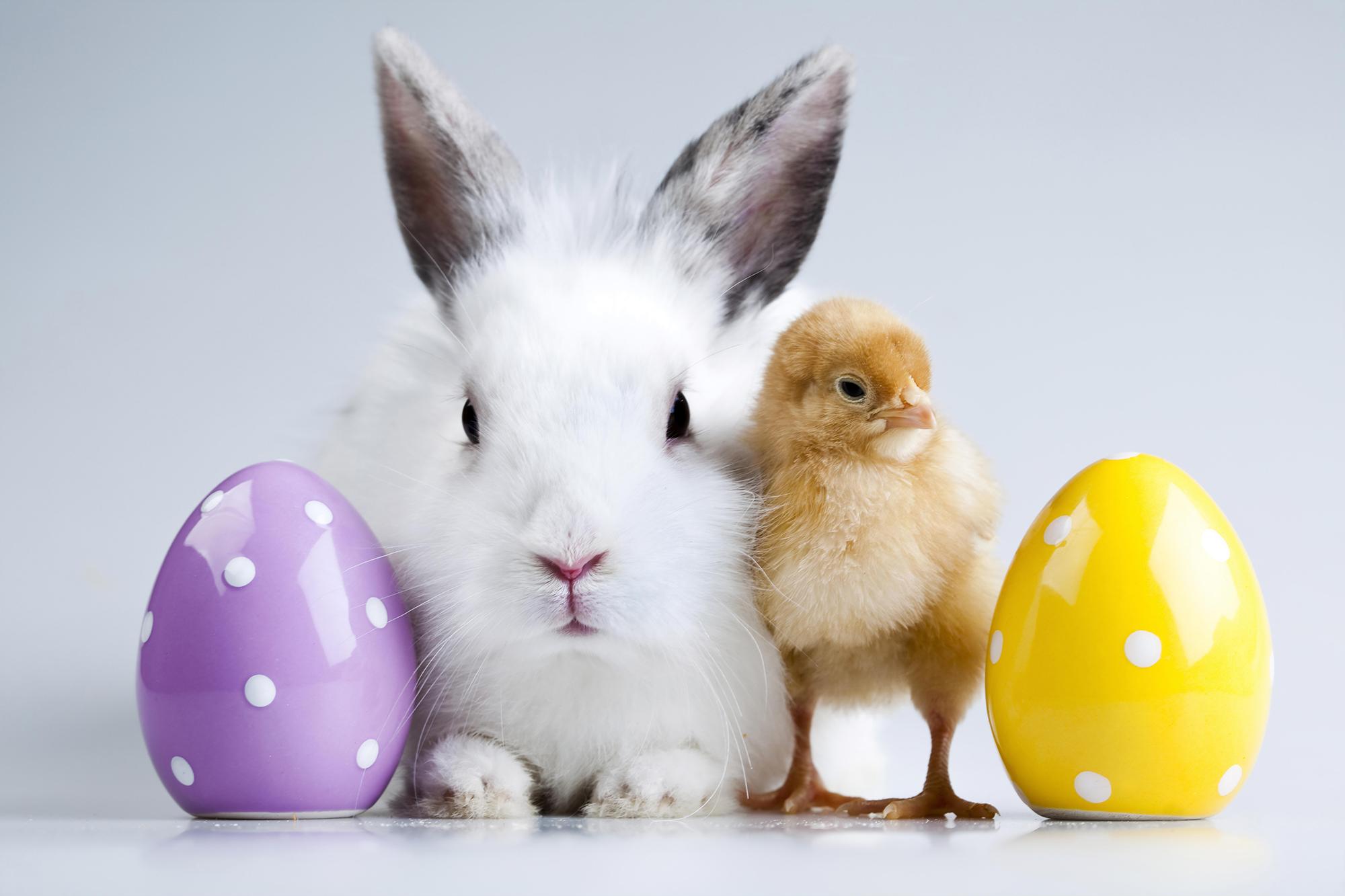 Die Zeit der Osterhasen bricht an!